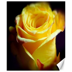Yellow Rose Curling Canvas 8  x 10  (Unframed)