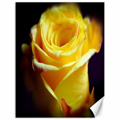Yellow Rose Curling Canvas 12  X 16  (unframed)