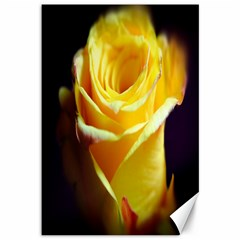 Yellow Rose Curling Canvas 12  X 18  (unframed)