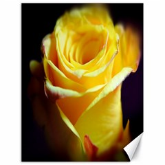 Yellow Rose Curling Canvas 18  X 24  (unframed)