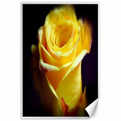 Yellow Rose Curling Canvas 24  x 36  (Unframed)