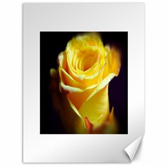 Yellow Rose Curling Canvas 36  x 48  (Unframed)