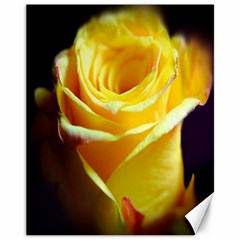 Yellow Rose Curling Canvas 11  x 14  (Unframed)