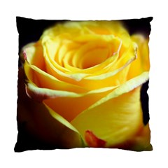 Yellow Rose Curling Cushion Case (Single Sided)