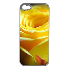 Yellow Rose Curling Apple Iphone 5 Case (silver)