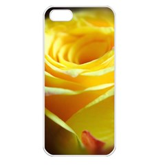 Yellow Rose Curling Apple Iphone 5 Seamless Case (white)