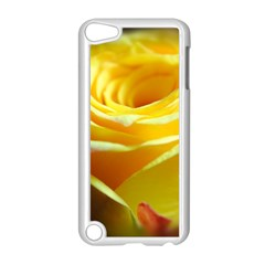 Yellow Rose Curling Apple Ipod Touch 5 Case (white)