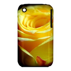 Yellow Rose Curling Apple Iphone 3g/3gs Hardshell Case (pc+silicone)
