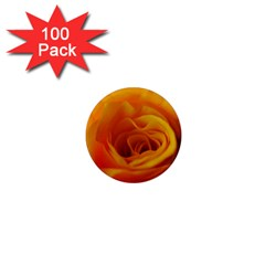 Yellow Rose Close Up 1  Mini Button Magnet (100 pack)