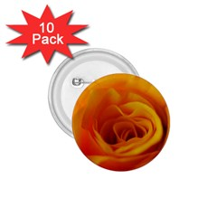 Yellow Rose Close Up 1 75  Button (10 Pack)