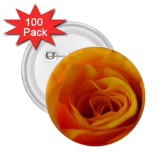 Yellow Rose Close Up 2.25  Button (100 pack)