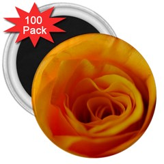 Yellow Rose Close Up 3  Button Magnet (100 Pack)