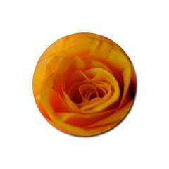 Yellow Rose Close Up Drink Coasters 4 Pack (Round)