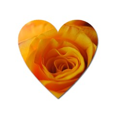 Yellow Rose Close Up Magnet (Heart)