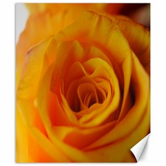 Yellow Rose Close Up Canvas 8  x 10  (Unframed)