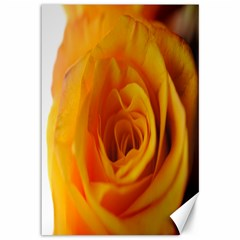 Yellow Rose Close Up Canvas 12  x 18  (Unframed)