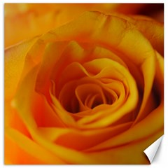 Yellow Rose Close Up Canvas 16  X 16  (unframed)