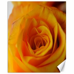Yellow Rose Close Up Canvas 16  x 20  (Unframed)