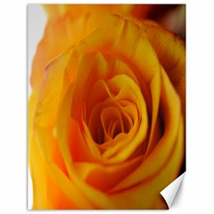 Yellow Rose Close Up Canvas 18  X 24  (unframed)