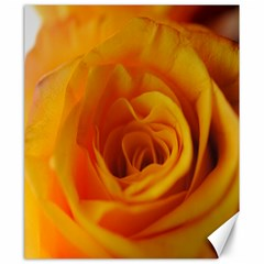 Yellow Rose Close Up Canvas 20  x 24  (Unframed)