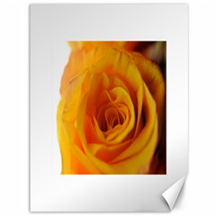 Yellow Rose Close Up Canvas 36  x 48  (Unframed)