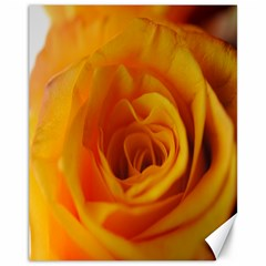 Yellow Rose Close Up Canvas 11  x 14  (Unframed)