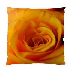 Yellow Rose Close Up Cushion Case (Two Sided)
