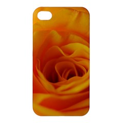 Yellow Rose Close Up Apple iPhone 4/4S Hardshell Case