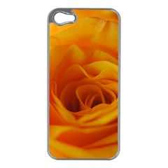 Yellow Rose Close Up Apple iPhone 5 Case (Silver)