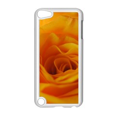 Yellow Rose Close Up Apple iPod Touch 5 Case (White)