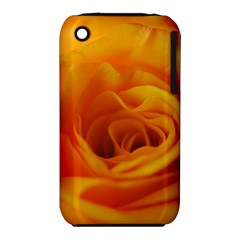 Yellow Rose Close Up Apple iPhone 3G/3GS Hardshell Case (PC+Silicone)