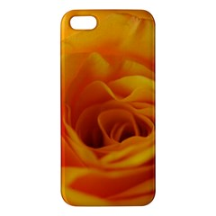 Yellow Rose Close Up iPhone 5S Premium Hardshell Case
