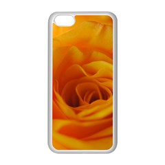 Yellow Rose Close Up Apple Iphone 5c Seamless Case (white)