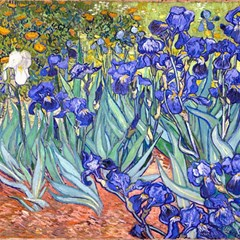 Vincent Van Gogh Irises Canvas 12  x 12  (Unframed)
