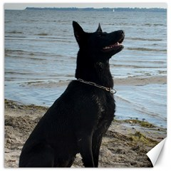 Black German Shepherd Canvas 12  X 12  (unframed)