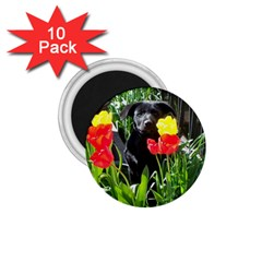Black GSD Pup 1.75  Button Magnet (10 pack)