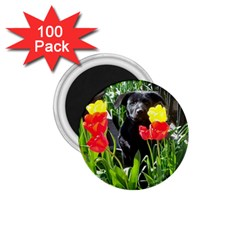 Black GSD Pup 1.75  Button Magnet (100 pack)