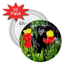 Black GSD Pup 2.25  Button (10 pack)