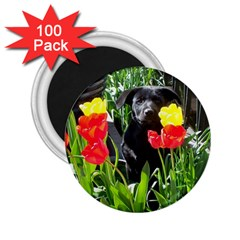 Black GSD Pup 2.25  Button Magnet (100 pack)
