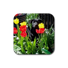 Black Gsd Pup Drink Coasters 4 Pack (square)