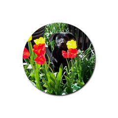 Black GSD Pup Drink Coasters 4 Pack (Round)