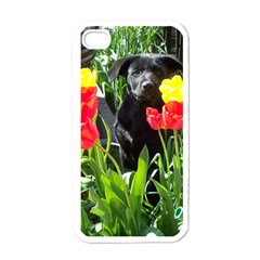 Black Gsd Pup Apple Iphone 4 Case (white)
