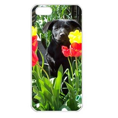 Black Gsd Pup Apple Iphone 5 Seamless Case (white)