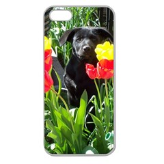 Black Gsd Pup Apple Seamless Iphone 5 Case (clear)