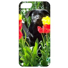 Black Gsd Pup Apple Iphone 5 Classic Hardshell Case
