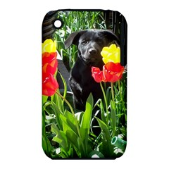 Black GSD Pup Apple iPhone 3G/3GS Hardshell Case (PC+Silicone)