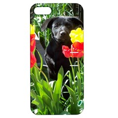 Black GSD Pup Apple iPhone 5 Hardshell Case with Stand