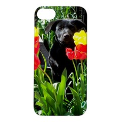 Black GSD Pup Apple iPhone 5S Hardshell Case