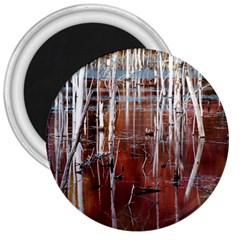 Automn Swamp 3  Button Magnet