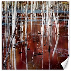 Automn Swamp Canvas 16  x 16  (Unframed)